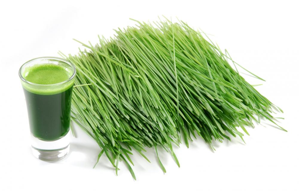 GRAMA DO TRIGO - WHEAT GRASS